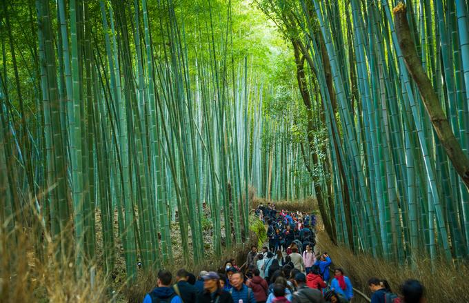 'Cảm giác lạ' thu hút hàng chục triệu khách đến rừng tre ở Nhật mỗi năm 10:40   14/02/2019