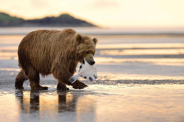 Có một Alaska hoang dã và đẹp phóng khoáng khiến ai cũng ước một lần được đặt chân 17:19   21/04/2017