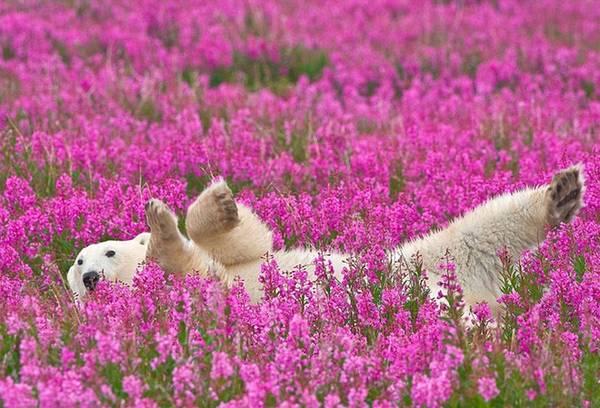 Tiếng gọi nơi hoang dã ở cánh đồng hoa dại Canada 15:32   03/09/2015